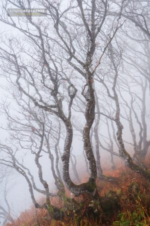Forêt du Creux du Van
