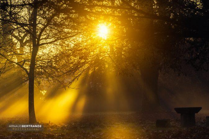 Rayons de soleil dans un parc